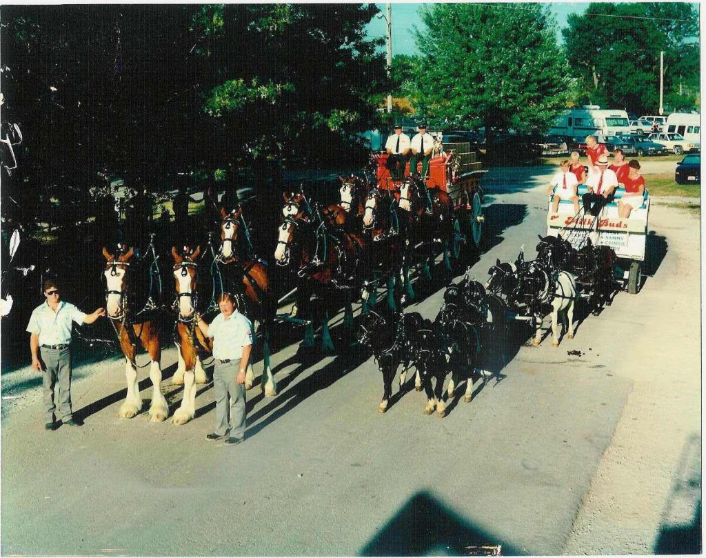 My Dad's favorite hobby-- The Milk Buds. His 8-pony hitch he modeled after the Budweiser Clydesdales...but he wanted to promote MILK!